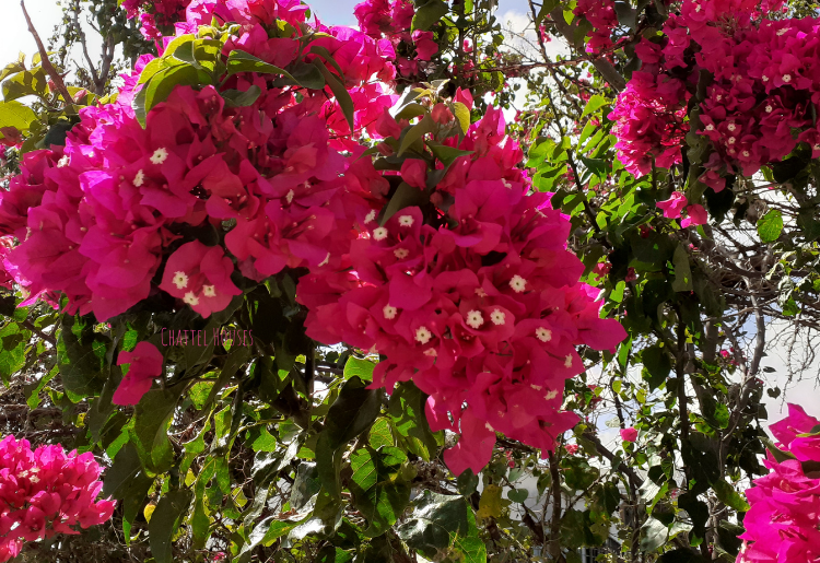 Chattel Houses - Jumpstart Your Tropical Garden By Planting These Colourful Blooming Shrubs - Featured